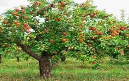 راز شوم زیر درخت میوه باغ روستای عارفی مشهد / جوان 2 ساعت دوید تا کشته نشود!